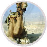 Closeup Of A Camel Round Beach Towel