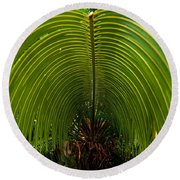 Closeup Of A Palm Tree Leaf Round Beach Towel