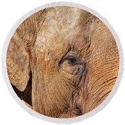 Closeup Of An Elephant Round Beach Towel