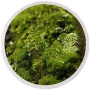Closeup Of Moss And Lichen. Rhoen Round Beach Towel