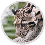 Clouded Leopard Cub Round Beach Towel