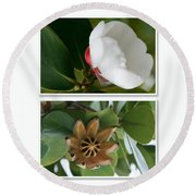 Clusia Rosea - Clusia Major - Autograph Tree - Maui Hawaii Round Beach Towel by Sharon Mau