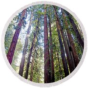 Coastal Redwoods Reach For The Sky In Armstrong Redwoods State Preserve Near Guerneville-ca Round Beach Towel
