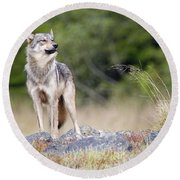 Coastal Wolf Round Beach Towel