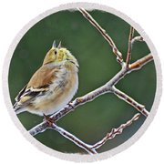 Cock-a-doodle-doo Gold Finch  Round Beach Towel