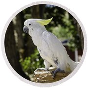 Cockatoo White Parrot Round Beach Towel