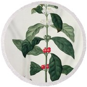 Coffea Arabica From Phytographie Round Beach Towel