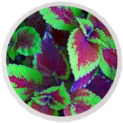 Coleus Color Round Beach Towel