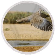Collared Dove  Round Beach Towel