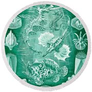 Collection Of Teleostei Round Beach Towel