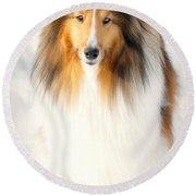 Collie  Round Beach Towel by Diana Angstadt