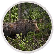 Colorado Moose Round Beach Towel