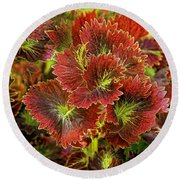 Colorful Coleus Round Beach Towel