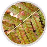Colorful Fern Square Round Beach Towel