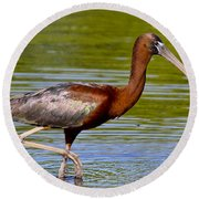Colorful Glossy Ibis Round Beach Towel