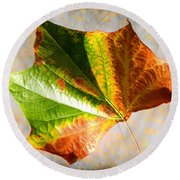 Colorful Leaf On The Ground Round Beach Towel