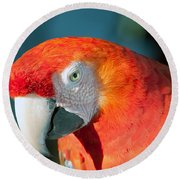 Colorful Parrot Round Beach Towel
