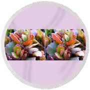 Colorful Succulents In Stereo Round Beach Towel