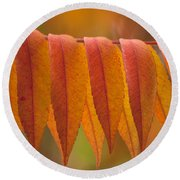 Colorful Sumac Foliage In Fall Round Beach Towel