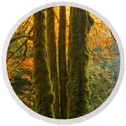 Colors In The Rainforest Round Beach Towel by Adam Jewell