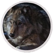 Colors Of A Wolf Round Beach Towel