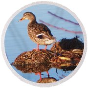 Comedian Duck Round Beach Towel