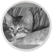 Comfy Kitten Round Beach Towel