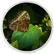 Common Blue Morpho Moth Round Beach Towel