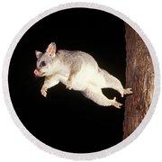 Common Brush-tailed Possum Round Beach Towel