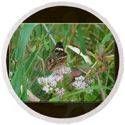 Common Buckeye Butterfly - Junonia Coenia Round Beach Towel