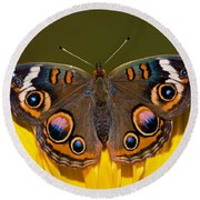 Common Buckeye Round Beach Towel