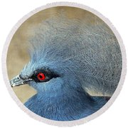 Common Crowned Pigeon Round Beach Towel