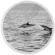 Common Dolphins Leaping. Round Beach Towel