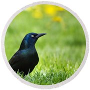 Common Grackle Round Beach Towel by Christina Rollo