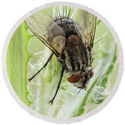 Common House Fly 0.9x Round Beach Towel