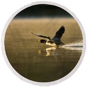 Common Loon Pictures 147 Round Beach Towel