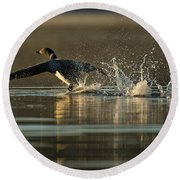 Common Loon Pictures 152 Round Beach Towel