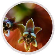 Common Milkweed Round Beach Towel