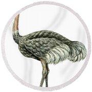 Common Ostrich Round Beach Towel