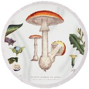 Common Poisonous Plants Round Beach Towel by English School