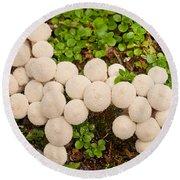Common Puffball Mushrooms Lycoperdon Perlatum Round Beach Towel
