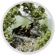 Common Raven Feeding Young In Nest Round Beach Towel