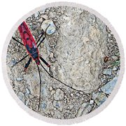 Common Red Bug Along The Seti River Road-nepal  Round Beach Towel