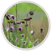 Common Redpoll In A Field Of Thistle Round Beach Towel