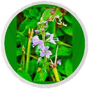Common Speedwell On Skyline Trail In Cape Breton Highlands National Park-nova Scotia  Round Beach Towel