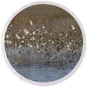 Common Teal Anas Crecca Round Beach Towel