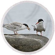 Common Tern Pictures 39 Round Beach Towel