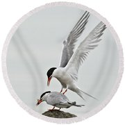 Common Tern Pictures 40 Round Beach Towel