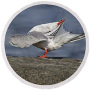 Common Tern Pictures 51 Round Beach Towel