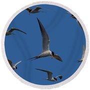 Common Terns Collage Round Beach Towel